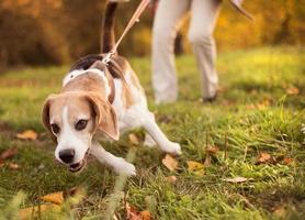 passeio de cachorro foto