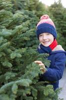 comprando árvore de natal foto