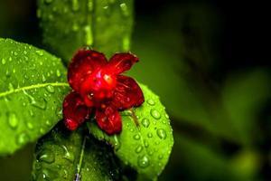 flores tropicais foto