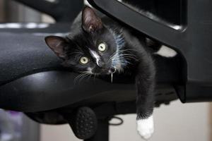gatinho de escritório foto