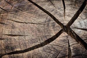 textura de tronco cortado