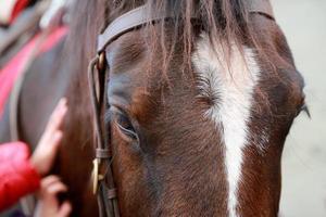 close-up do cavalo foto