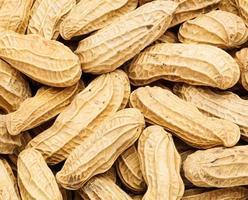 amendoim close-up foto
