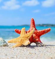 estrela do mar com concha à beira-mar