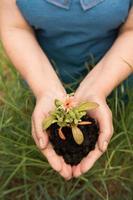 conceito de eco para os agricultores no jardim com colheita foto