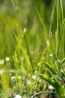 orvalho da manhã em uma folha de grama foto