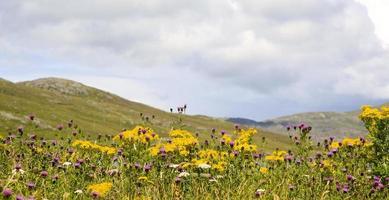 escocesas flores silvestres em uma colina foto