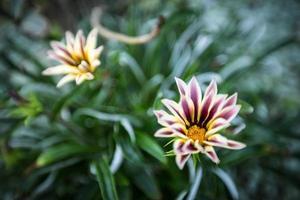 flor de perto foto