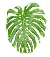 folha tropical brilhante perto com buracos foto