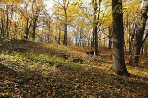 a floresta, outono