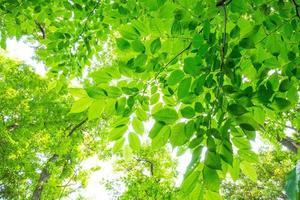 folhas verdes frescas foto