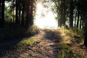 caminho na floresta foto