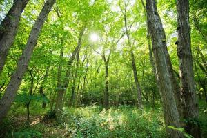 árvores verdes frescas foto