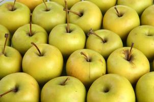 maçãs suculentas, close-up foto