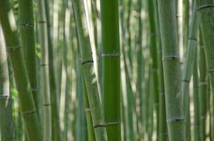floresta de bambu vista de lado
