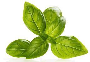 folhas de manjericão close-up foto