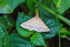 close-up de mariposa foto