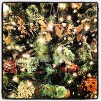 close-up da árvore de natal foto