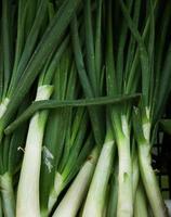 close-up de cebolinha