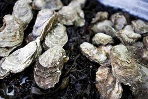 close-up de ostras foto
