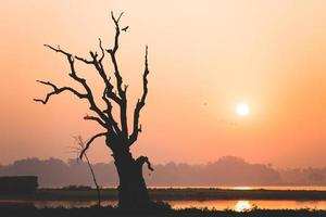 árvore morta foto