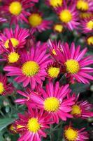 flor de close-up foto