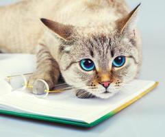 leitor de gatos foto