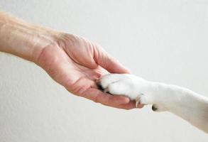 homem e cachorro de mãos dadas foto
