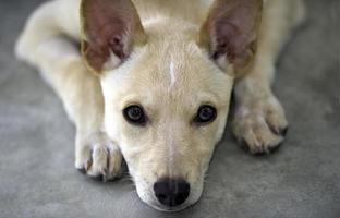 raposa filhote de cachorro foto