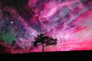 árvore do espaço foto