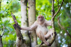 macaco sozinho na floresta foto