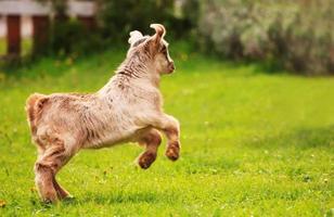 bebe cabra foto