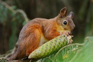 esquilo sentado em uma árvore foto