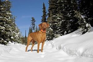 na trilha de inverno foto