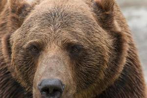 urso 3 foto