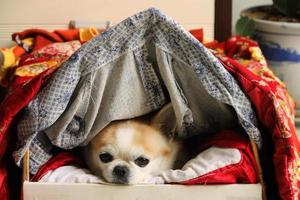 cachorro foto