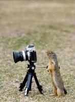 esquilo à terra em pé olhando através do visor da câmera