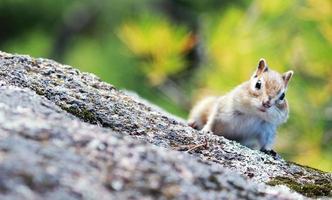 esquilo na floresta foto