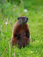 mãe esquilo foto
