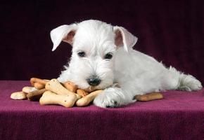 filhote de cachorro com ossos de biscoitos de cão