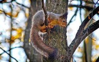 esquilo em um galho de árvore. foto