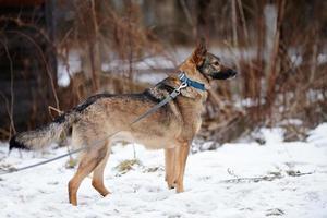 cão não de raça pura. foto