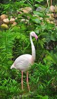 ótimo flamingo foto