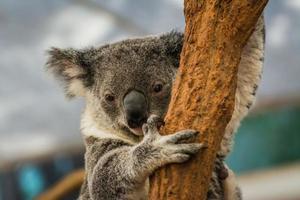 explorando a costa leste da austrália de campista foto