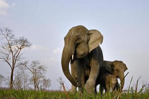 família de elefantes asiáticos na Índia foto