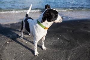 filhote de cachorro preto e branco na praia foto
