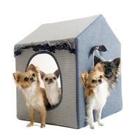 chihuahuas em cão de casa foto