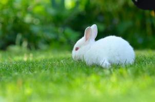 coelho engraçado bebê branco na grama