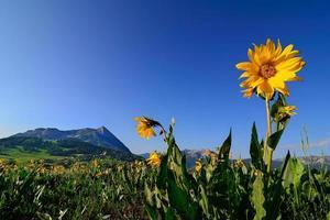 estação das flores silvestres foto