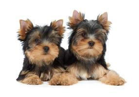 dois pequenos animais de estimação foto